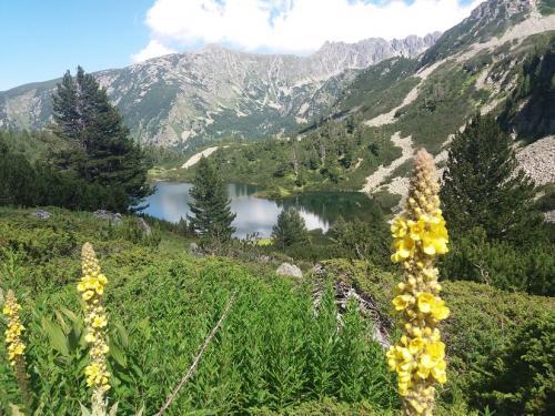 Vasiliška jezera