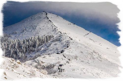 Foto: Goran Stamenković