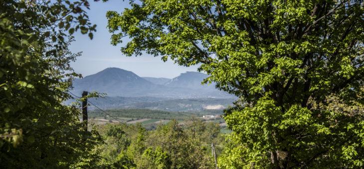 Banja Trepča, Ostrica, Bukovik